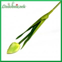 Kwiat TULIPANA zielony 43cm/1szt.