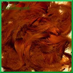 Pióra krótkie brązowe 10g