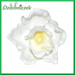 Magnolia - kwiat BIAŁY