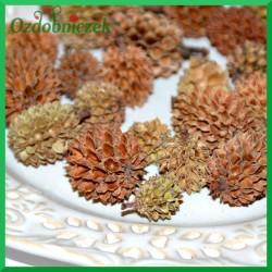 Szyszki CASURINA naturalne 250g