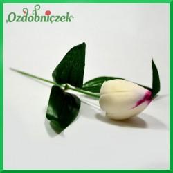 Kwiat TULIPANA śmietana z amarantem 24cm/1szt.