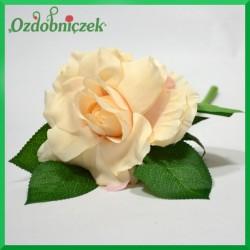 RÓŻA NA KRÓTKIEJ ŁODYDZE -blada brzoskwinia