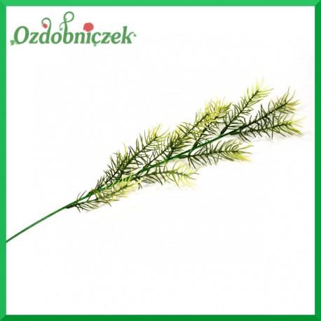 Asparagus gałązka ozdobna 50cm