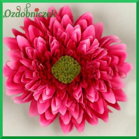 Gerber mini - kwiat amarantowy
