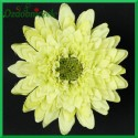 Gerber mini - kwiat jasny zielony