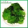 Chrobotek reniferowy 50g. mech ozdobny ciemny zielony