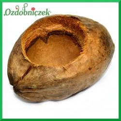 Łupina kokosa-DUŻA