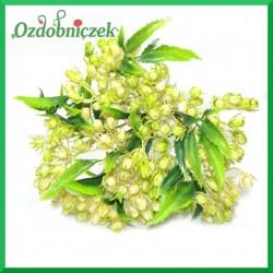 Kremowo-zielona gałązka ozdobna z listkami 32cm  BUKIET 10szt.