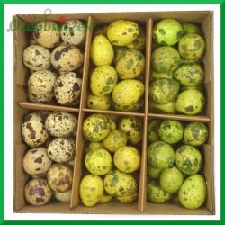 Jajka przepiórcze wydmuszki - zestaw 3 kolorów ( zielony, zółty i naturalne ) pudełko 72szt.