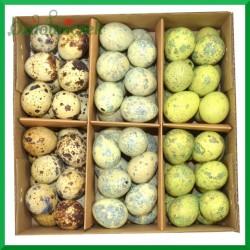 Jajka przepiórcze wydmuszki - zestaw 3 kolorów ( niebieskie zółte i naturalne ) pudełko 72szt.