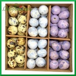 Jajka przepiórcze wydmuszki - zestaw 3 kolorów ( fioletowe, niebieskie i naturalne ) pudełko 72szt.
