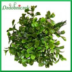 BUKSZPAN DUŻY- zielona gałązka ozdobna 19cm/6szt.