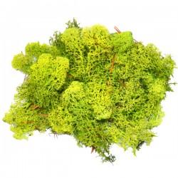 Chrobotek reniferowy 50g. jasno zielony mech ozdobny woreczek