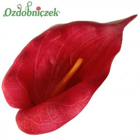 Kalla piankowa czerwona - główka kwiatowa