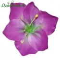Amarylis lilac - główka kwiatowa