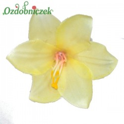 Lilia kremowa - główka kwiatowa