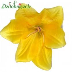 Lilia żółta - główka kwiatowa