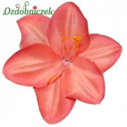 Lilia koralowa - główka kwiatowa