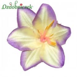 Lilia biało fioletowa - główka kwiatowa
