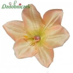 Lilia brzoskwiania - główka kwiatowa