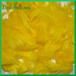 Pióra krótkie żółte 50g
