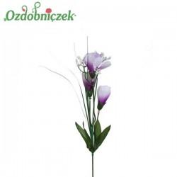 Krokus z trawa 3 kwiaty - FIOLETOWO BIAŁY