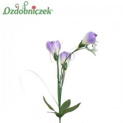 Krokus z trawa 3 kwiaty - LILIOWO BIAŁY