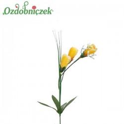 Krokus z trawa 3 kwiaty -  ŻÓŁTY