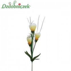 Krokus z trawa 3 kwiaty -  ŻÓŁTO BIAŁY