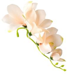 Kwiat frezji bez łodygi 14 cm- 5 kwiatów- BLADY RÓŻ