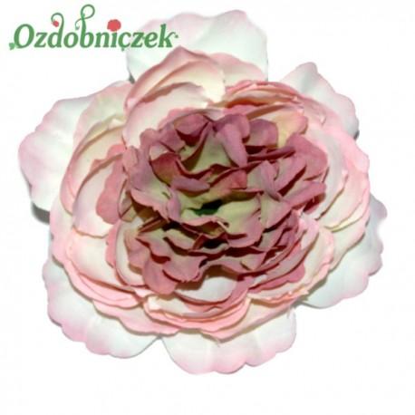 RÓŻA kameliowa wyrobowa PUDROWO BORDOWA - główka kwiatowa