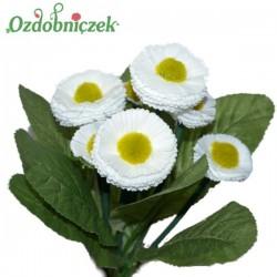 STOKROTKI bukiet bukiet 7 kwiatów BIAŁE