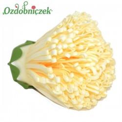 Chryzantema piankowa strzępiasta KREMOWA - główka kwiatowa 10cm