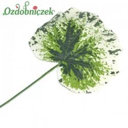 Liść begonii 47 cm