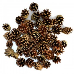 Szyszki naturalne sosnowe 3-5cm/50szt.