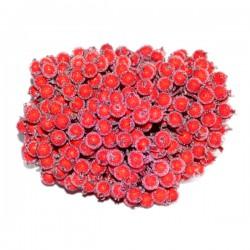 JARZĘBINA czerwona oszroniona PĘCZEK 400kuleczek