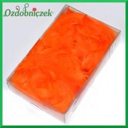 Pióra krótkie pomarańczowe DP